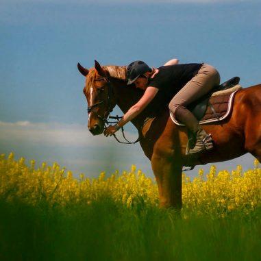 Écurie Wendy Terras: Pension complète, Travail du cheval, orientée CSO